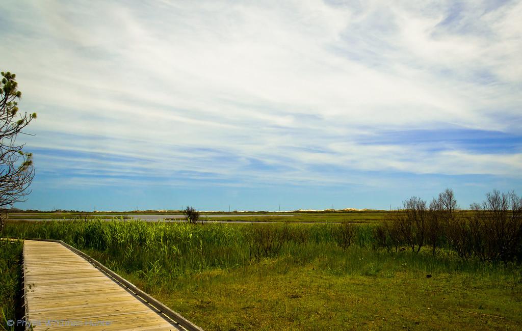 Wetlands, Bodie Island