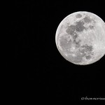 Full moon hand held