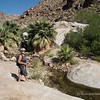 Hike up to see a palm oasis. Palm Canyon Trail on the lookout for bighorn sheep!