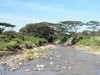 "Minor Crossing in Serengeti National Park (""SNP"")."
