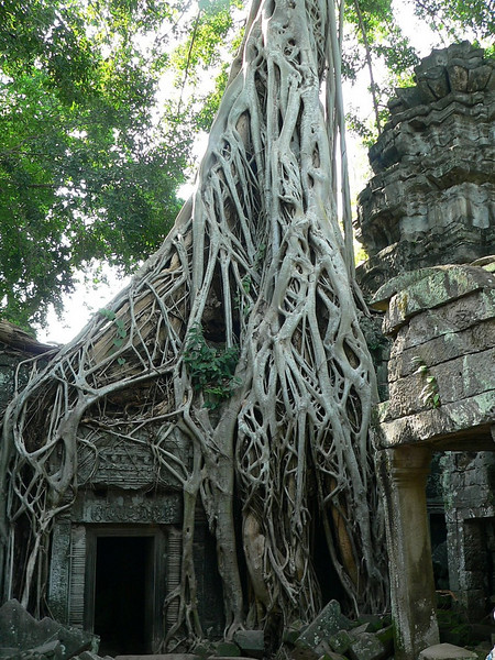 More roots within Ta Prohm Temple.