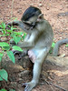 Baby monkey en route to Angkor Wat Temple.