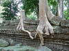 More amazing roots at Ta Prohm Temple.