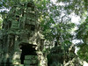 Within Ta Prohm Temple.