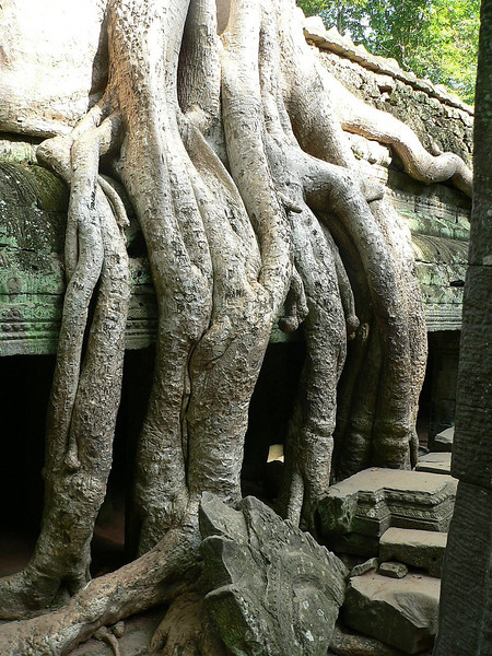 More invasive roots within Ta Prohm Temple.