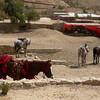 Horses at Petra.