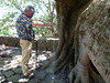 The third disbursement of Jane Lawson's ashes at the base of the sacred tree at Ambohimanga.