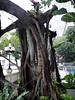 Garden at Shangri La Krungthep Wing, BKK.