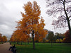 Autumnal colours of the Kensington Gardens.