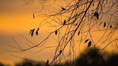 Morning @ Moraine State Park