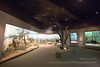 Hall of African Wildlife