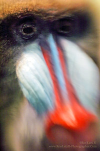 Lensbaby & The Mandrill
