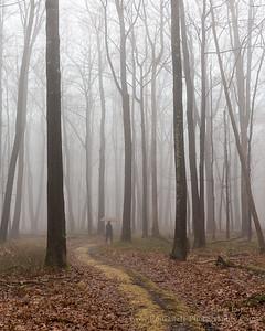 Trail Through the Clouds