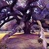 POSSESSED OAK TREE