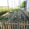 Leo's vegetable garden.  The steel pipes are to support tomato plants
