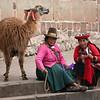 Llama and llama sweaters.