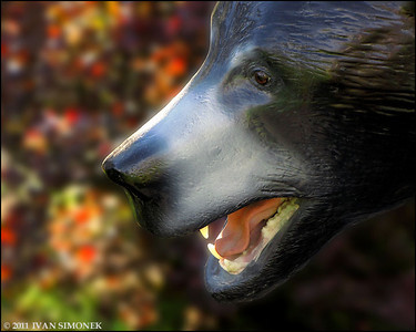 """BRUNO 3"",a black bear statue,Petersburg,Alaska,USA."