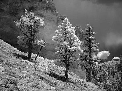 Bryce Canyon Area - Dgrin ShootOut 2006
