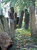 Headstones, Old Jewish cemetery, 1439-1900.