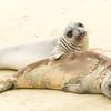 Elephant Seals, Point Reyes National Seashore