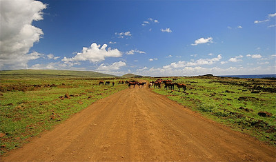 Wilde paarden blokkeren de weg. Paaseiland (Rapa Nui), Chili.