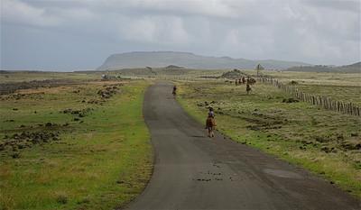 Cowboys op Paaseiland. Paaseiland (Rapa Nui), Chili.