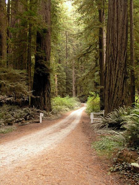 Redwood National Park, California.
