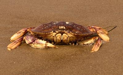 Crabby!