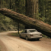Redwood National Park, California.  I hope the tree does not fall on my car :-)