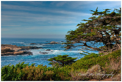 Point Lobos.