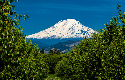 Mt. St. Helens with pears