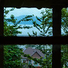 Kitchen window view (Airbnb)