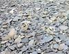 Beach Stones -- Realto Beach