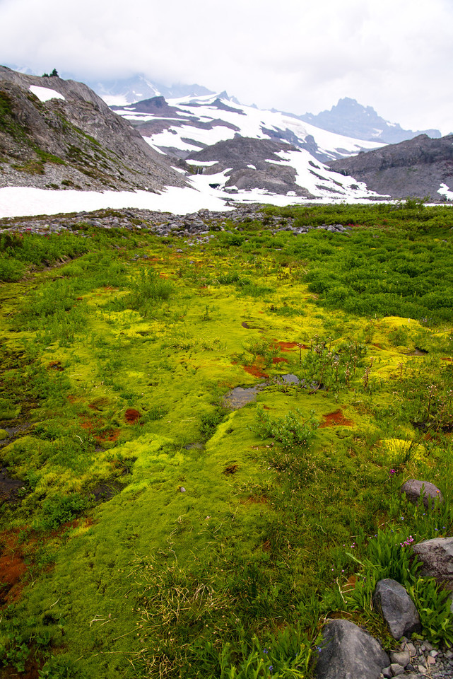 The greens and yellows were very bright