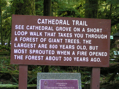 Two older ladies we met on the ferry told us not to miss Cathedral Grove, part of the MacMillan Provincial Park, on our drive from Nanaimo to Tofino (on Highway 4,  the route that goes via Port Alberni).  They are correct; this lovely place is well worth a stop.
