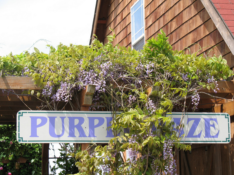 "Purple Haze Lavender Farm, Sequim, WA. ( <a href=""http://www.purplehazelavender.com"">http://www.purplehazelavender.com</a>) Image Copyright 2006 by DJB.  All Rights Reserved."