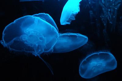 Seattle Waterfront & Aquarium