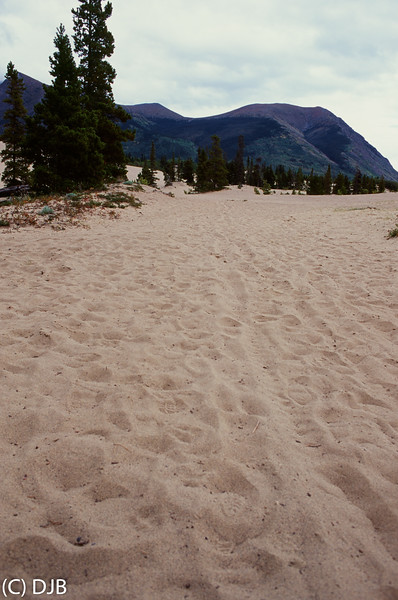 Carcross Desert, Carcross, Yukon, Canada.