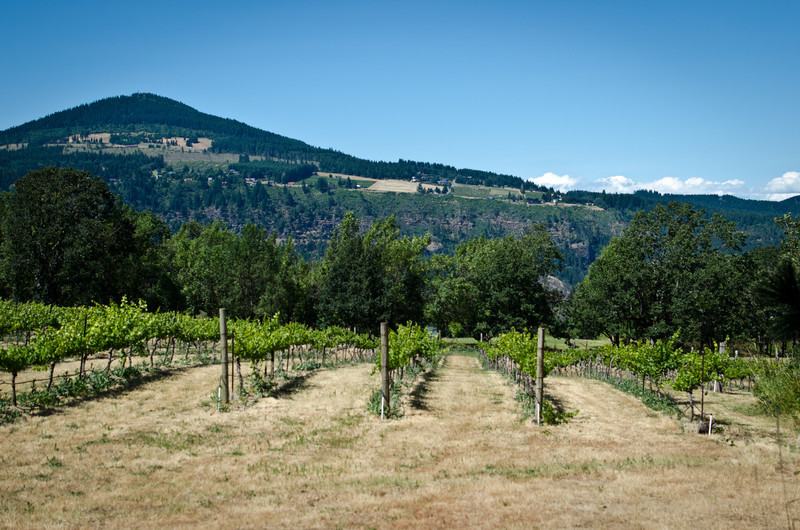 Cathedral Ridge Winery, Hood River, Oregon
