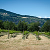 Cathedral Ridge Winery, Hood River, Oregon