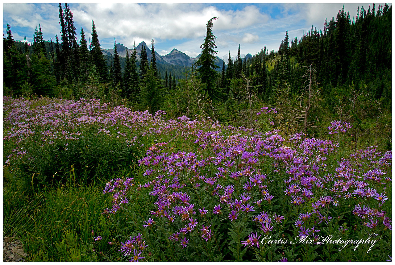 Alpine beauty.
