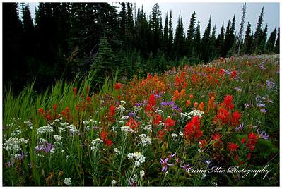 Many pockets of wildflowers.