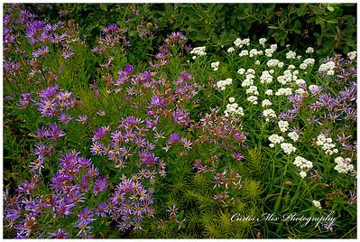 Wlidflowers