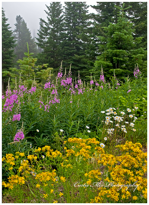 Wildflowers at the high Cascades.