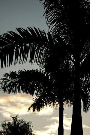Palm Silhouette at Sunrise