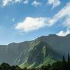 Ko'olau Mountains and Cook Pine Trees
