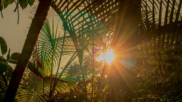 Tropical foliage at sunset