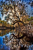 Art in Nature - Paddling the Suwannee River - Photo by Pat Bonish