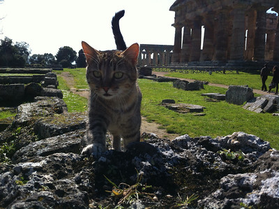 More of Paestum's wild and exciting fauna.
