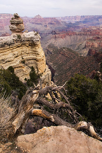 Grand Canyon  hoodoo